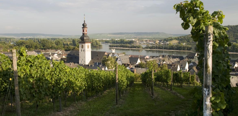Vingård Speyer enkelt