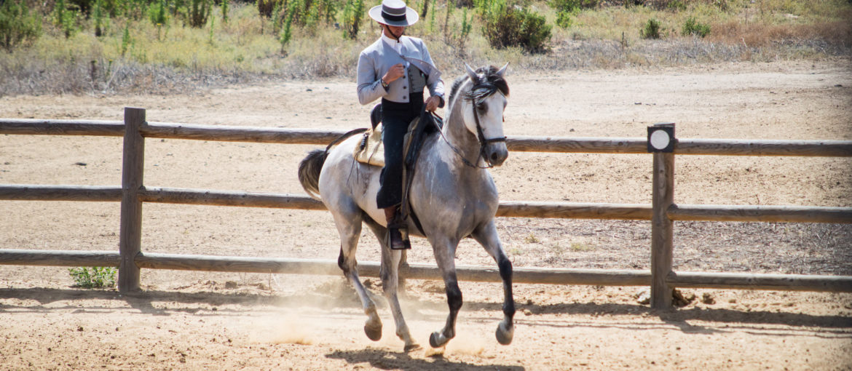 Andalusisk hästshow i Spanien