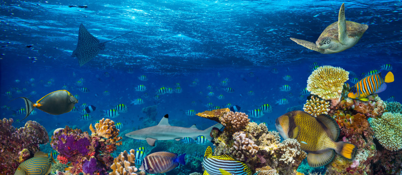 Upplev Seychellerna