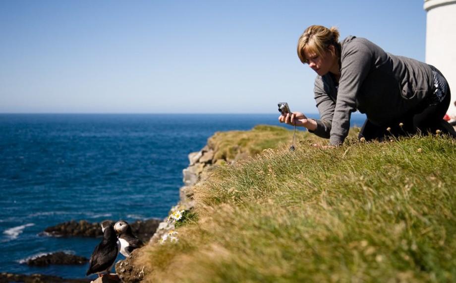 Lunnefågelskådning på Latrabjarg, västra Island