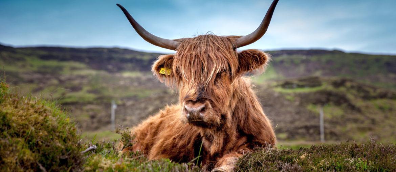 Kryssning genom det skotska höglandets hjärta