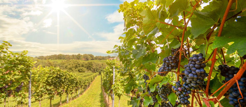 Flodkryssning på Rhône och Saône för vinälskare
